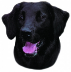 Flat Coated Retriever samolepka 2ks